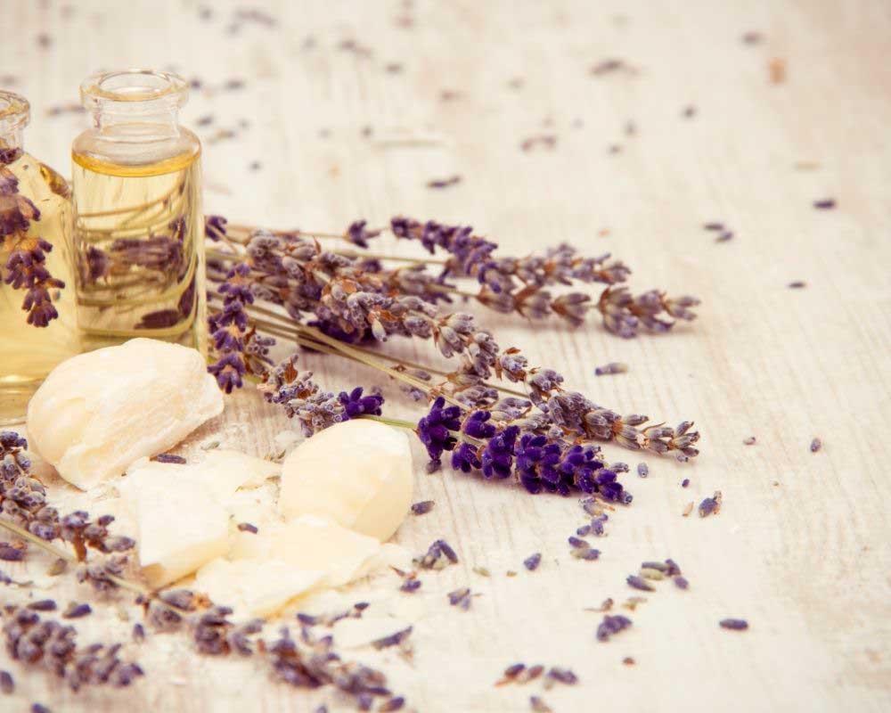 lavanda i biljke protiv opadanja kose