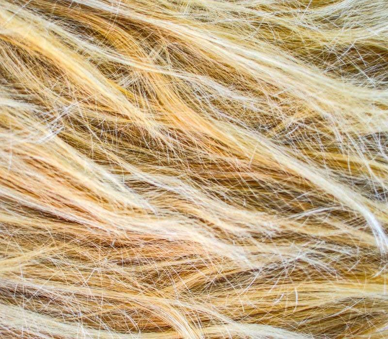 plava-ostecena-kosa