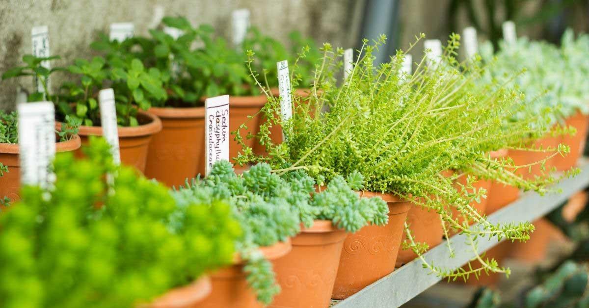 Koje su to idealne biljke za rast kose?